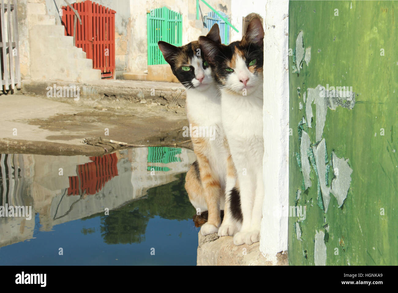 Two young domestic cats, domestic cat, calico, tricolor, torbie, sitting on a wall at the harbor in front of colorful - Stock Image