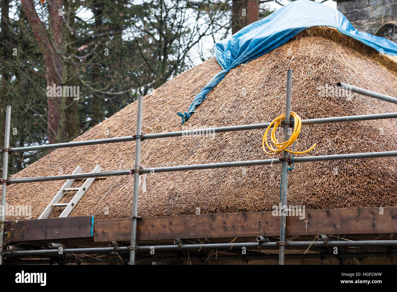 thatched roof under repair with scaffolding - Stock Image