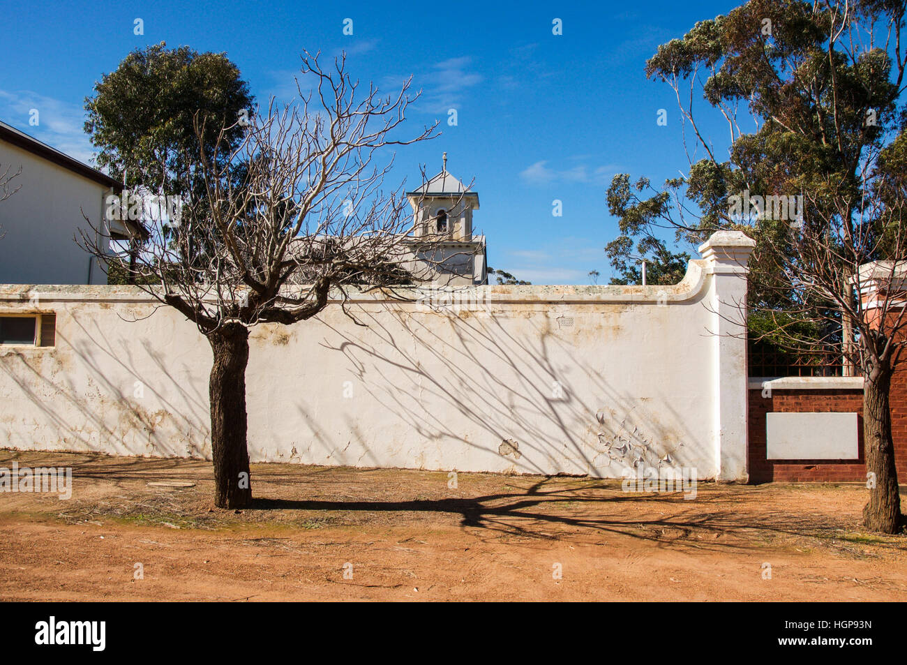 Leafless tree on footpath with shadow lines on ground and white boundary wall with trees and a blue sky. - Stock Image