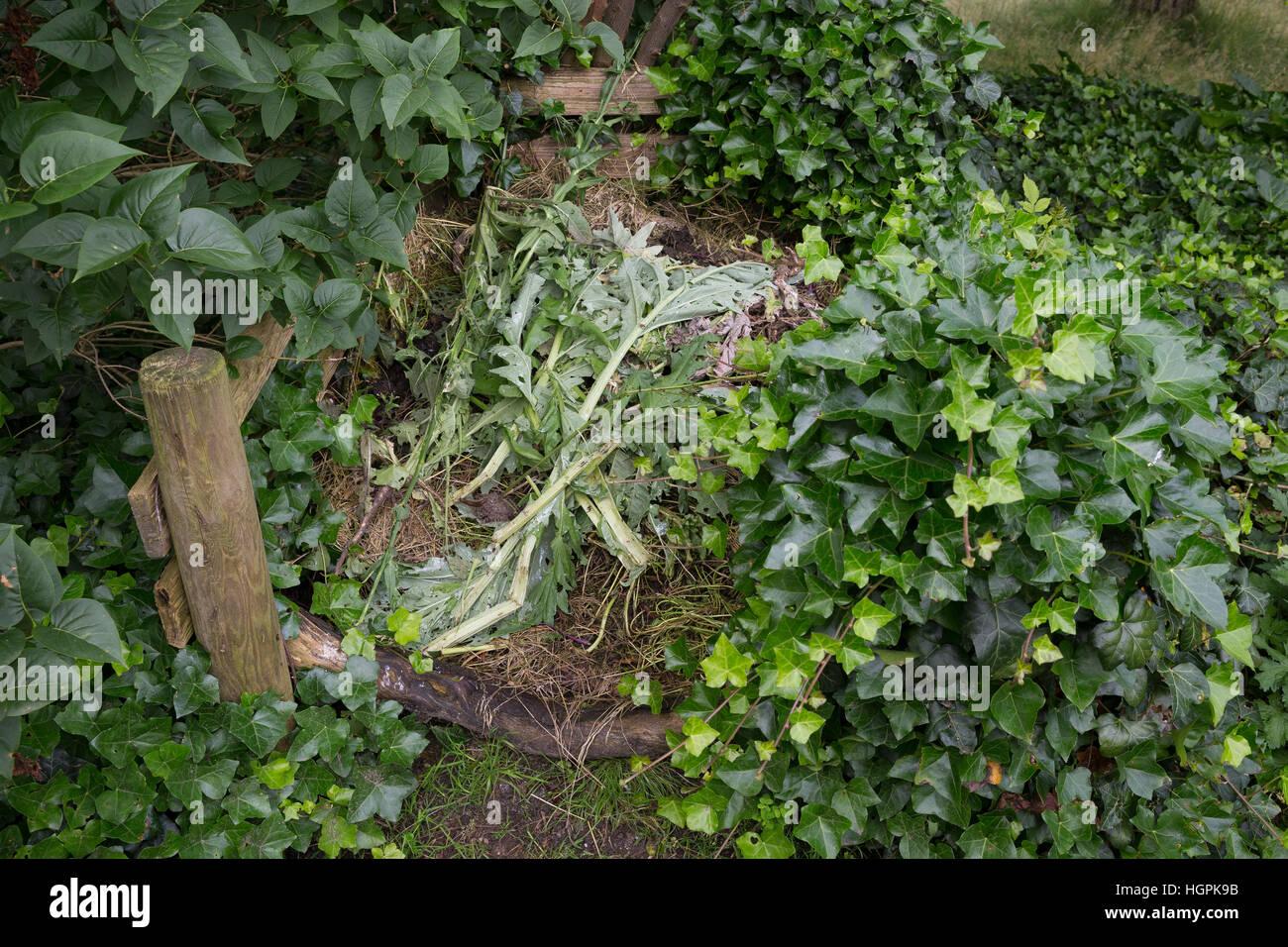 Komposthaufen, Kompost-Haufen, Kompost, Humus, Kompostieren, Kompostierung, Rotte, Gartenabfälle im Garten, - Stock Image