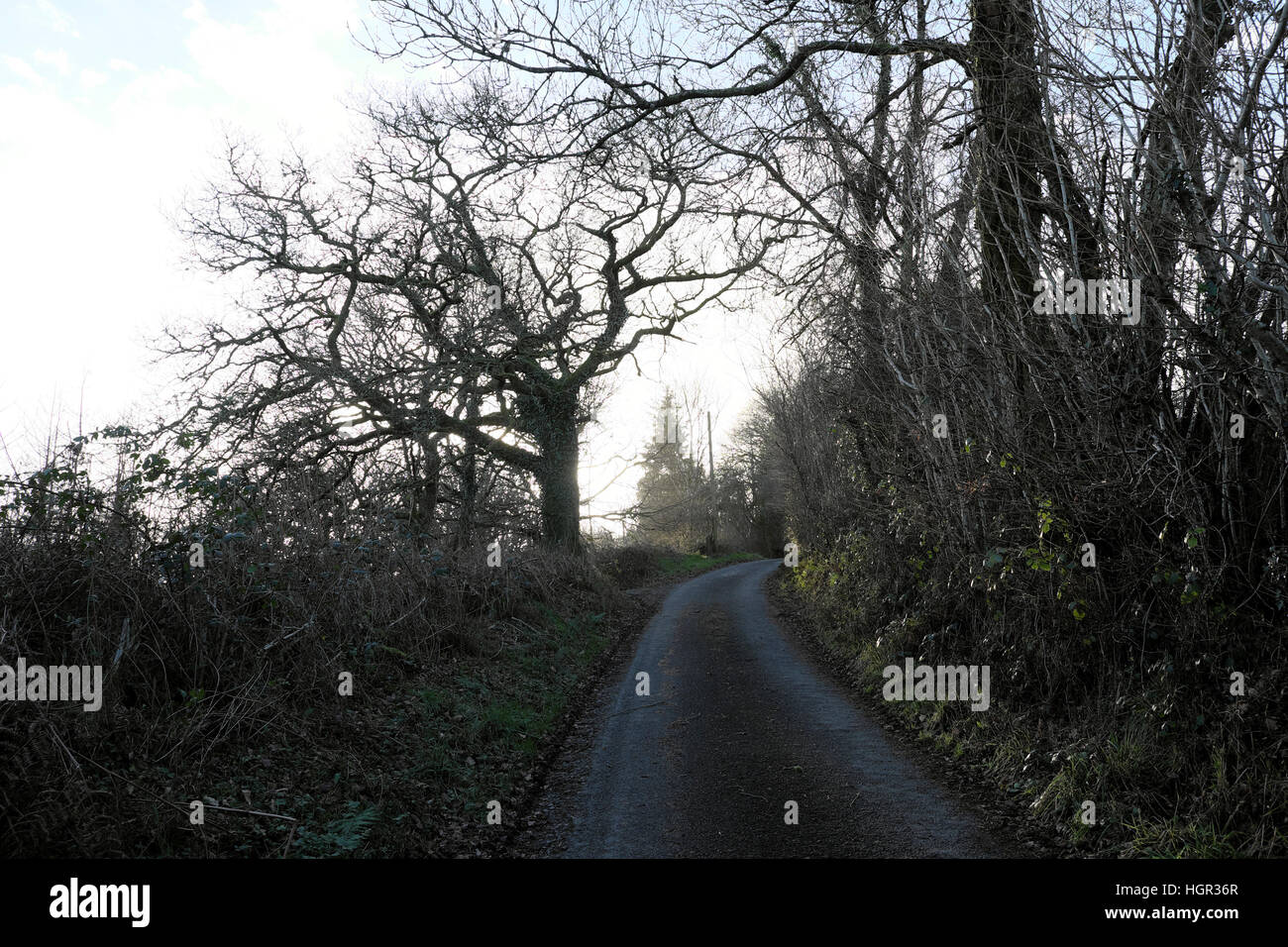 Winter trees and hedgerows along country lane at sundown in winter Carmarthenshire Wales UK  KATHY DEWITT Stock Photo