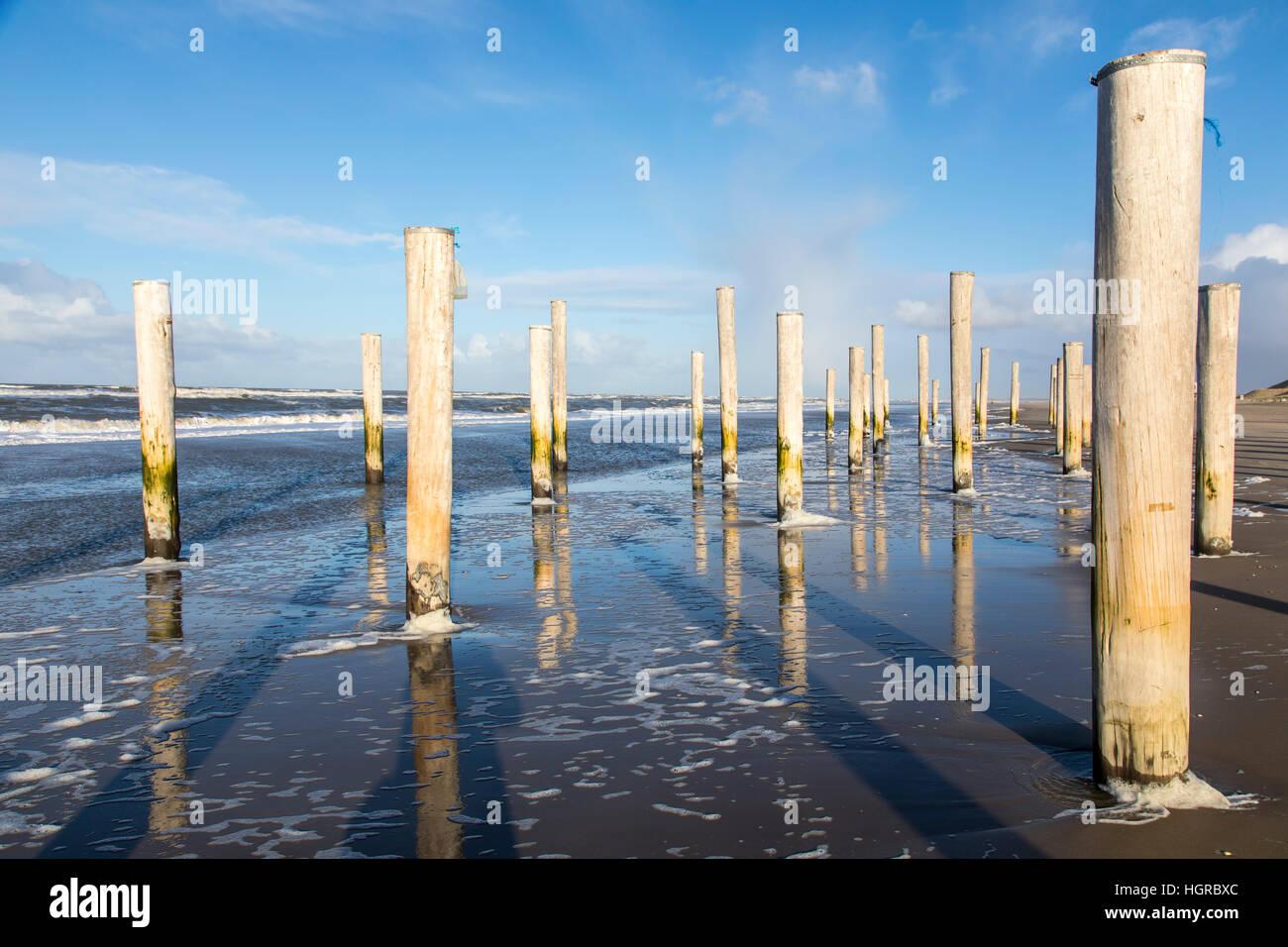 "artwork, art installation ""Petten in Palen' on the northern coast of Petten, North Holland, 160 wooden piles, - Stock Image"