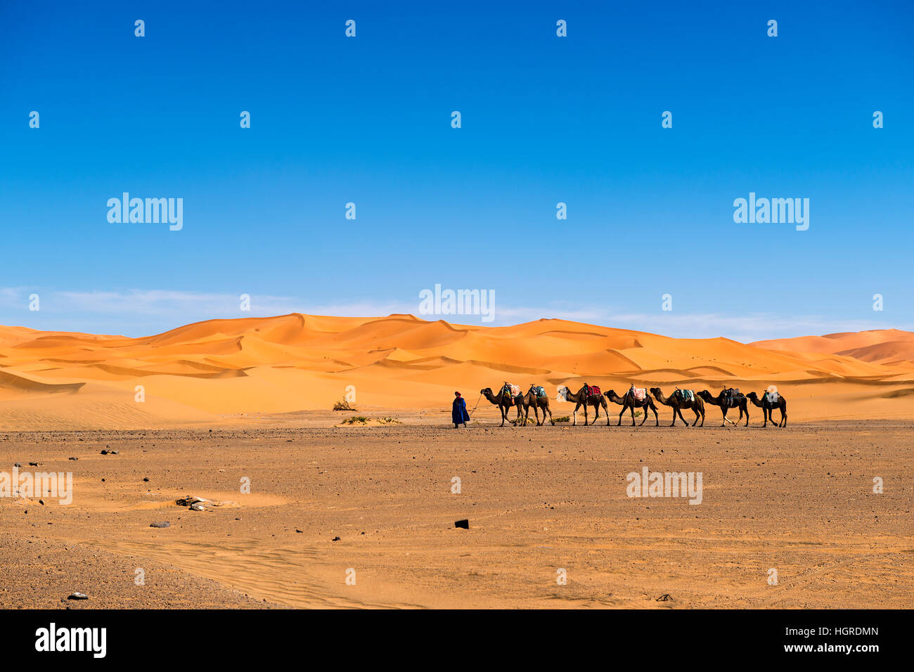 Merzouga, Morocco - April 12, 2016: Berber man leading a camel caravan in the Erg Chebbi dunes in Morocco. - Stock Image