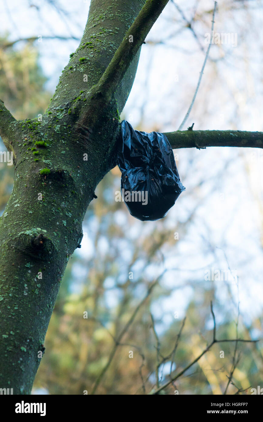 Black plastic bag containing dog poo / dogs mess / Feces / faeces / defecation / excreta discarded by a dog's - Stock Image