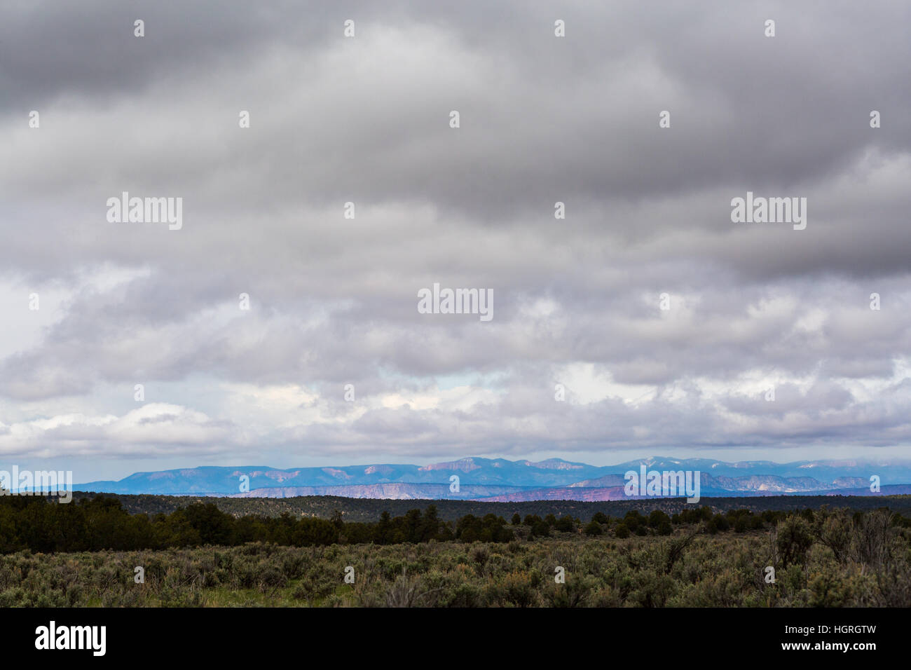 Sagebrush and juniper trees covering the open expanses of the northern Kaibab Plateau. Kaibab National Forest, Arizona Stock Photo