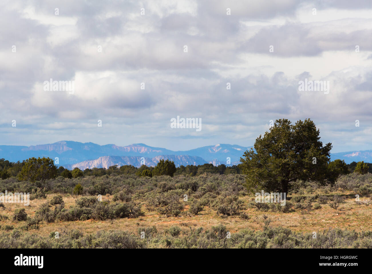 Sagebrush and juniper trees covering the open expanses of the northern Kaibab Plateau. Kaibab National Forest, Arizona - Stock Image