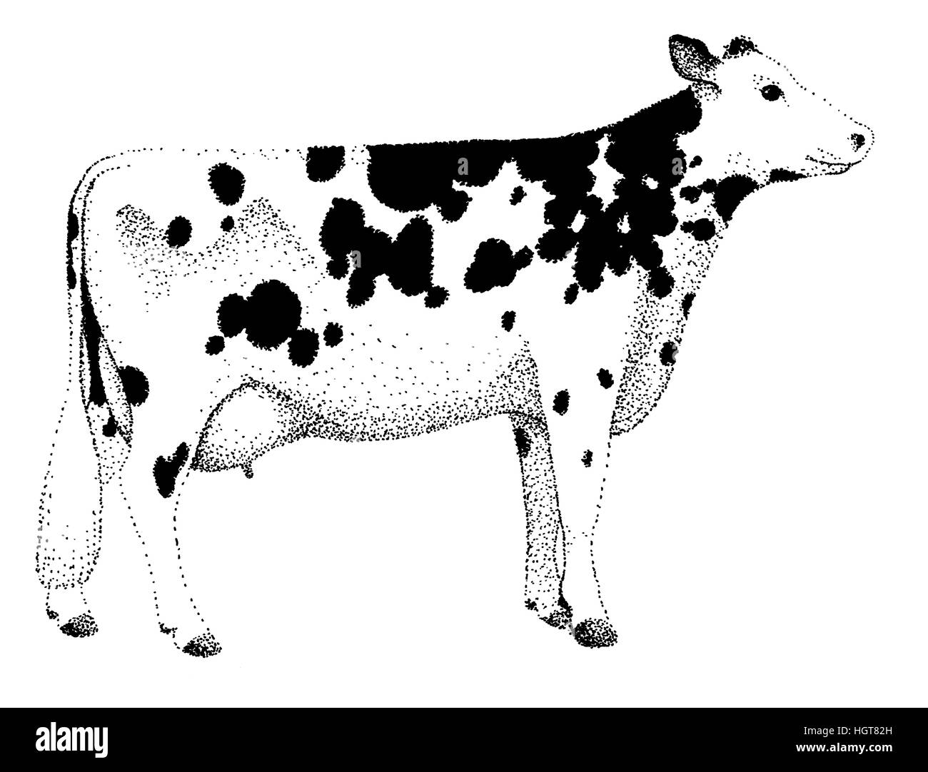 Cow illustration old lithography style hand drawn - Stock Image