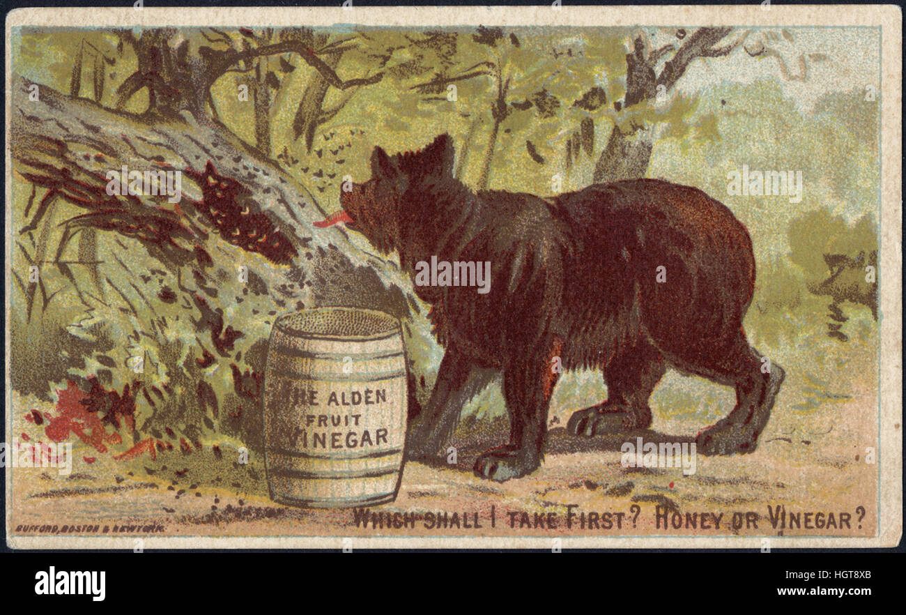 Which shall I take first_ Honey or vinegar_ The Alden Fruit Vinegar [front] - Food Trade Card - Stock Image