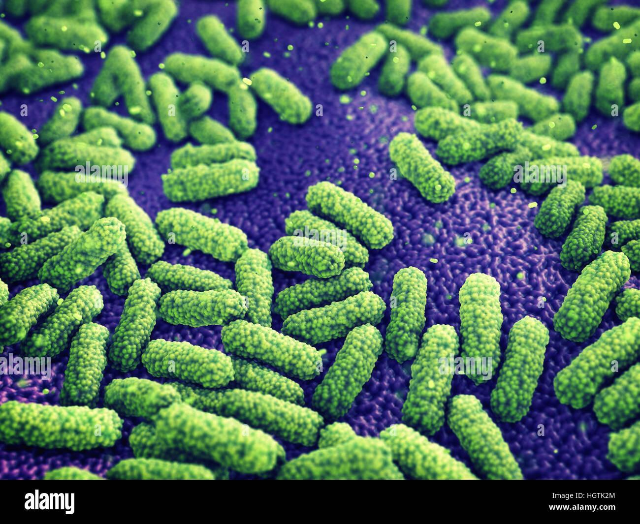 Bacteria , Germ infection , Epidemic disease - Stock Image