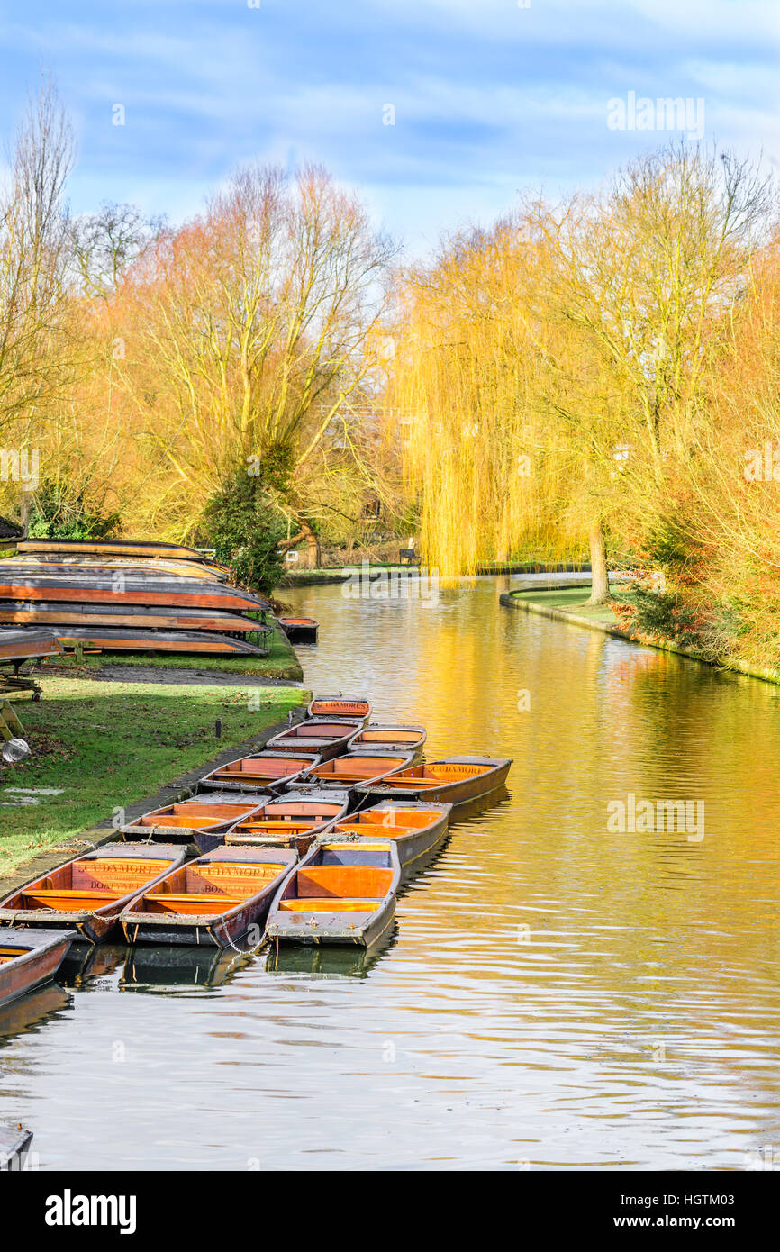 punt river Cam Cambridge boat kayak canoeist kayaker placid calm winter trees willow Scudamore's - Stock Image