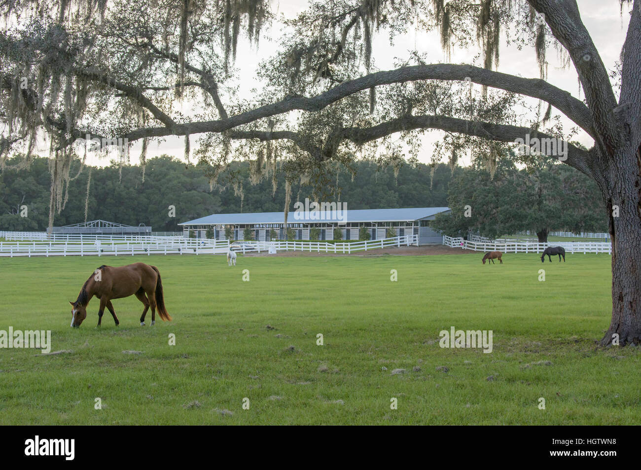 Pastoral horse farm scenic at sunset - Stock Image
