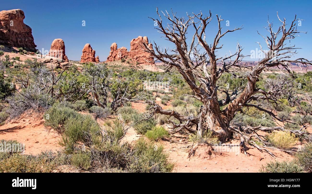 High Desert Ecosystem, Arches National Park, Moab, Utah - Stock Image