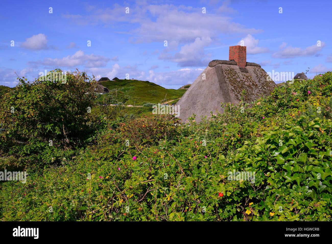 typische Friesenhaeuser, Reetdachhaeuser in den Duenen vom Hoernum, Sylt, nordfriesische Inseln, Nordfriesland, - Stock Image