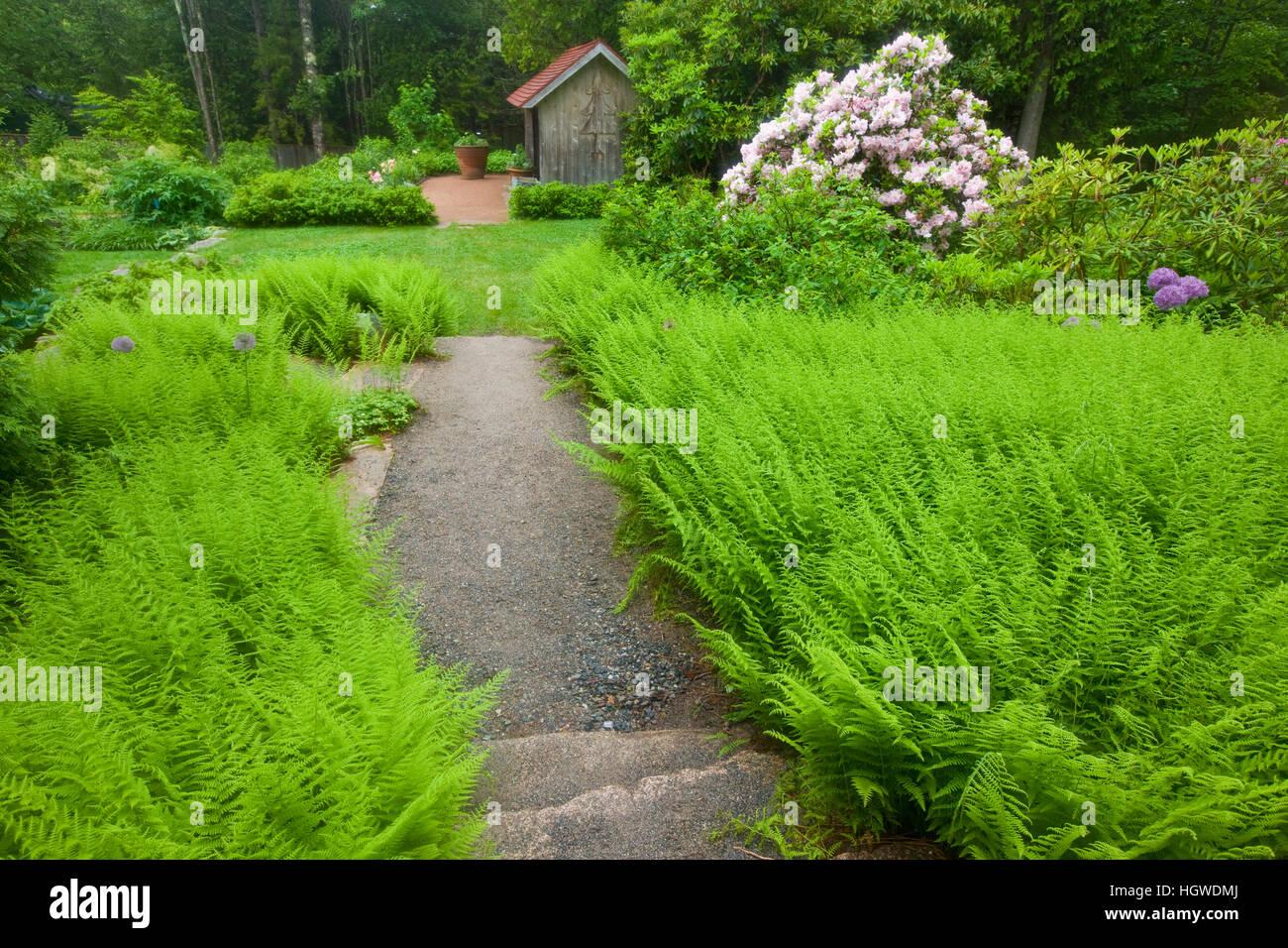 Thuya Gardens in Northeast Harbor, Maine. Stock Photo