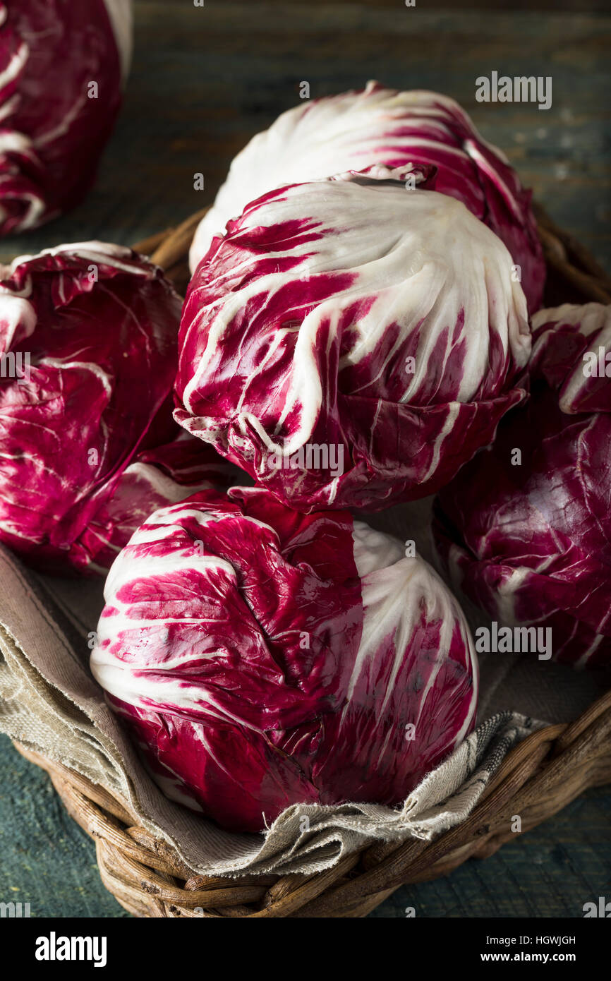 Raw Organic Purple Radicchio Lettuce Ready to Eat - Stock Image