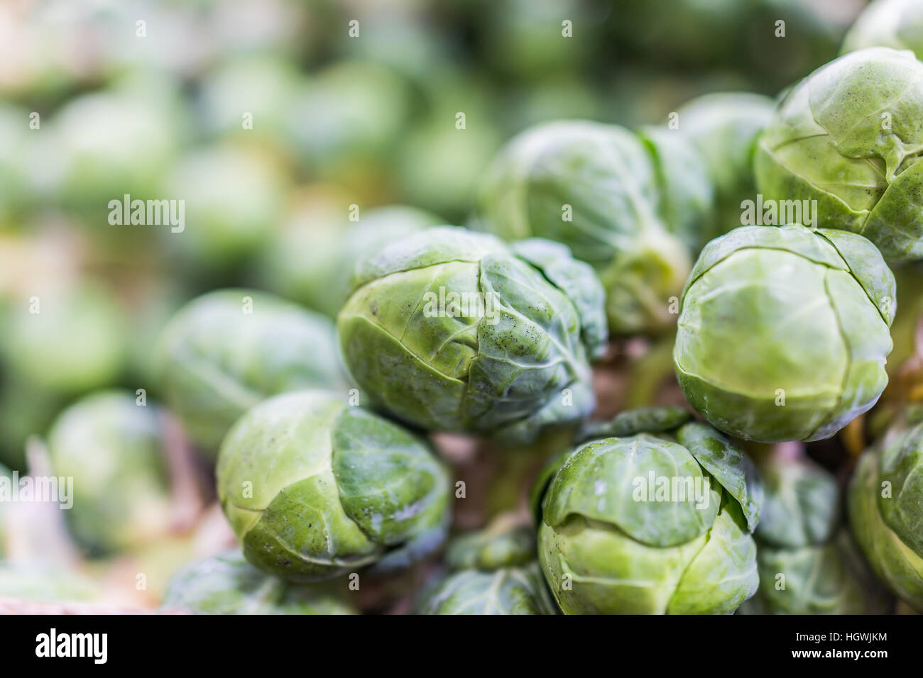 Macro closeup of brussels sprouts on stem on display - Stock Image