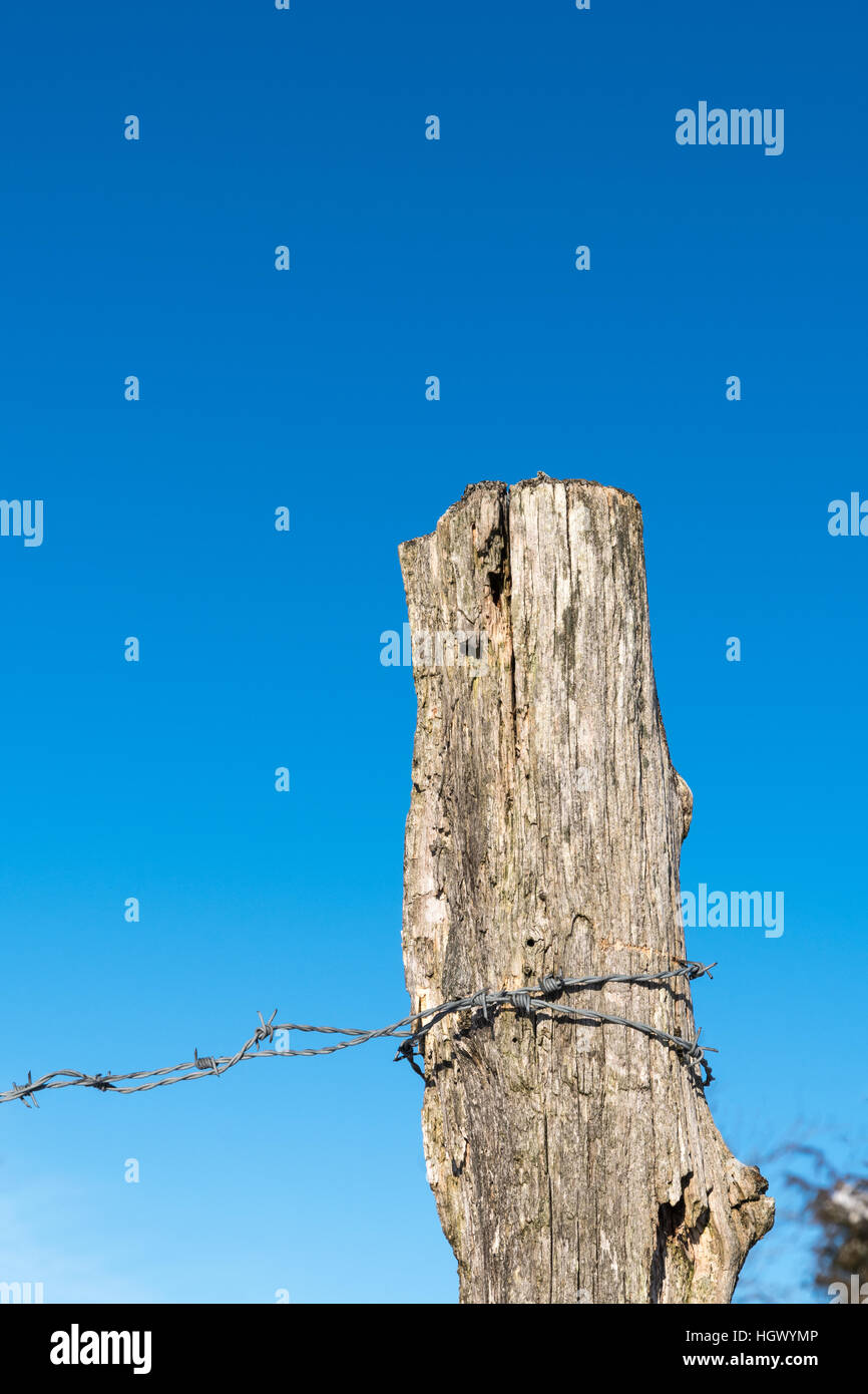 Detail of an old weathered fence post with barb wire by a clear blue sky Stock Photo