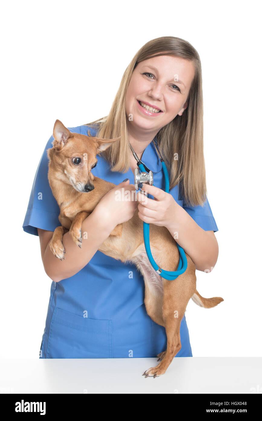 Young female vet examining dog by stethoscope - Stock Image