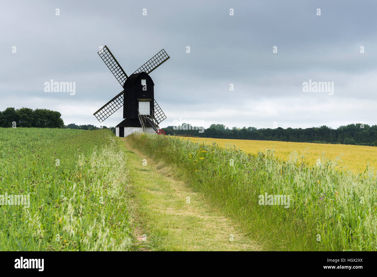 Pitstone Windmill with a wheat field in the foreground, Buckinghamshire, England, UK - Stock Image