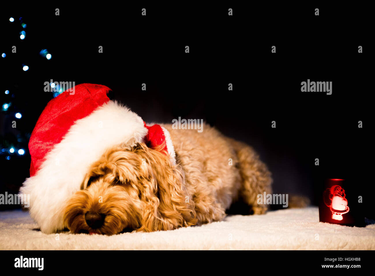 Cute dog looking hungover wearing christmas party hat - Stock Image