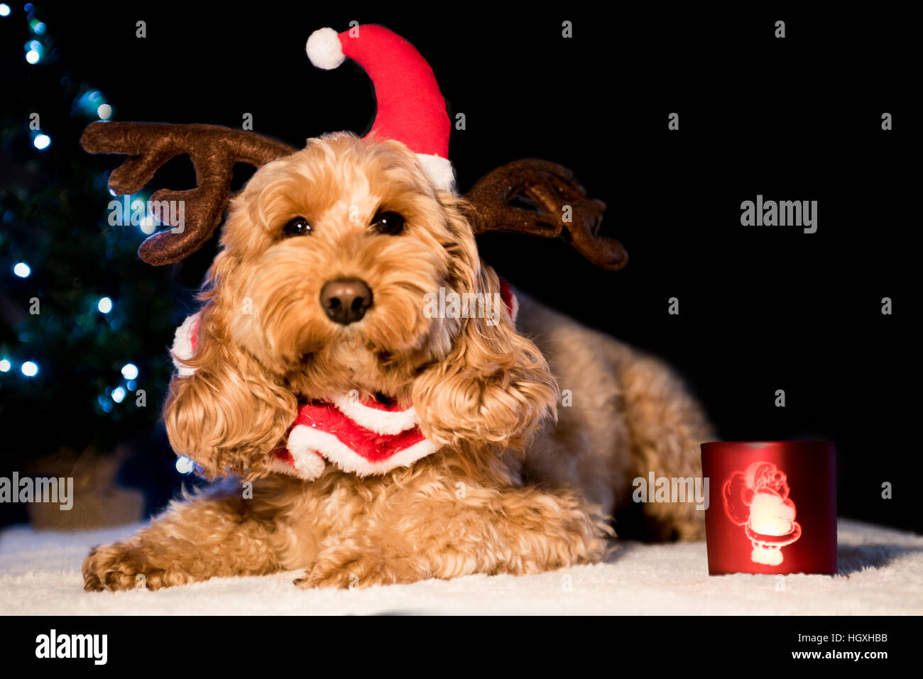 Cute dog wearing Christmas hat and antlers - Stock Image