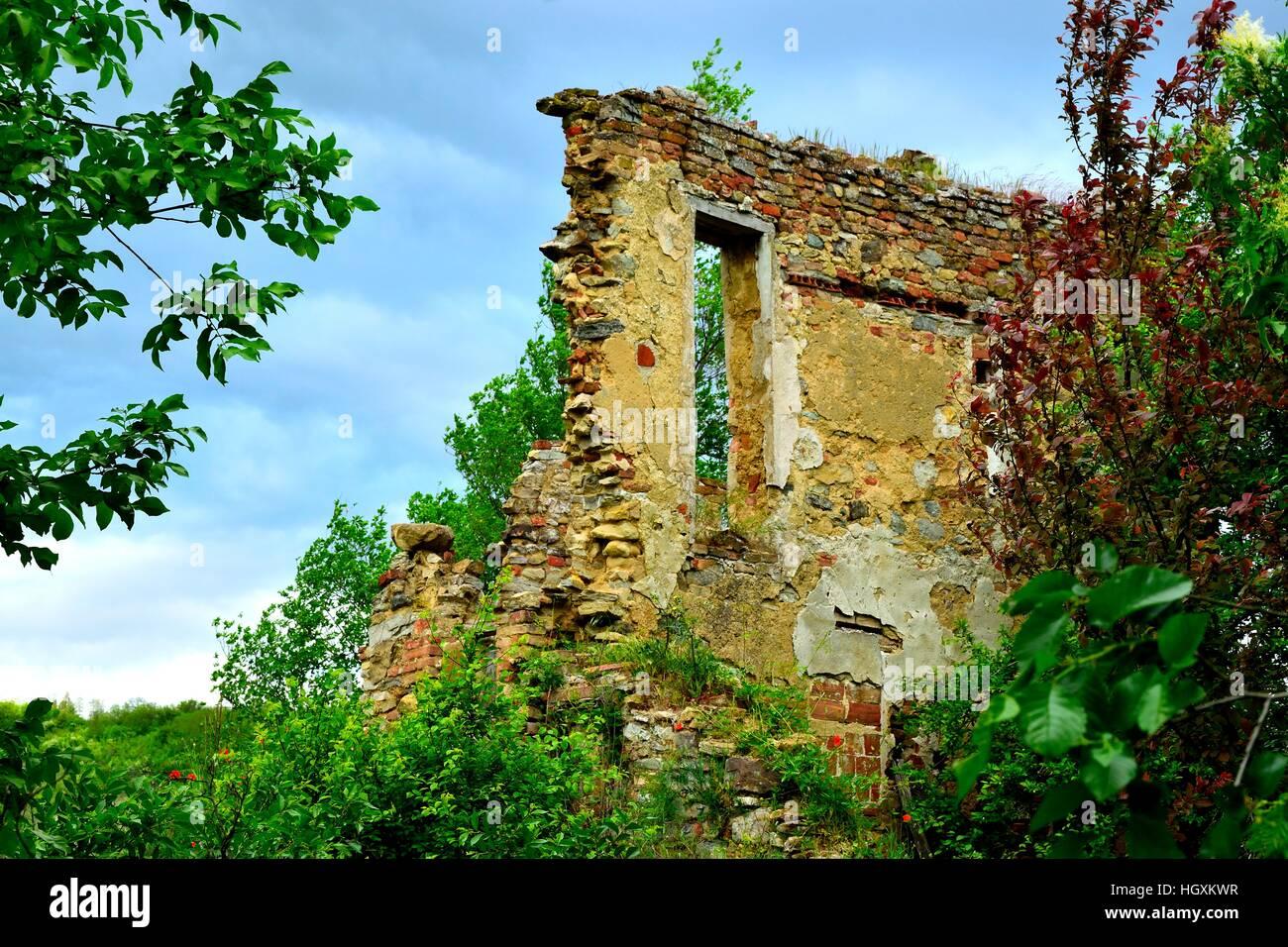 Broken Wall amid trees - Stock Image