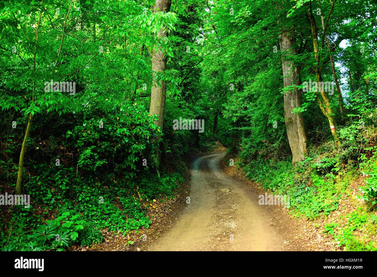 One of the ways middle of the forest surrounded by trees - Stock Image
