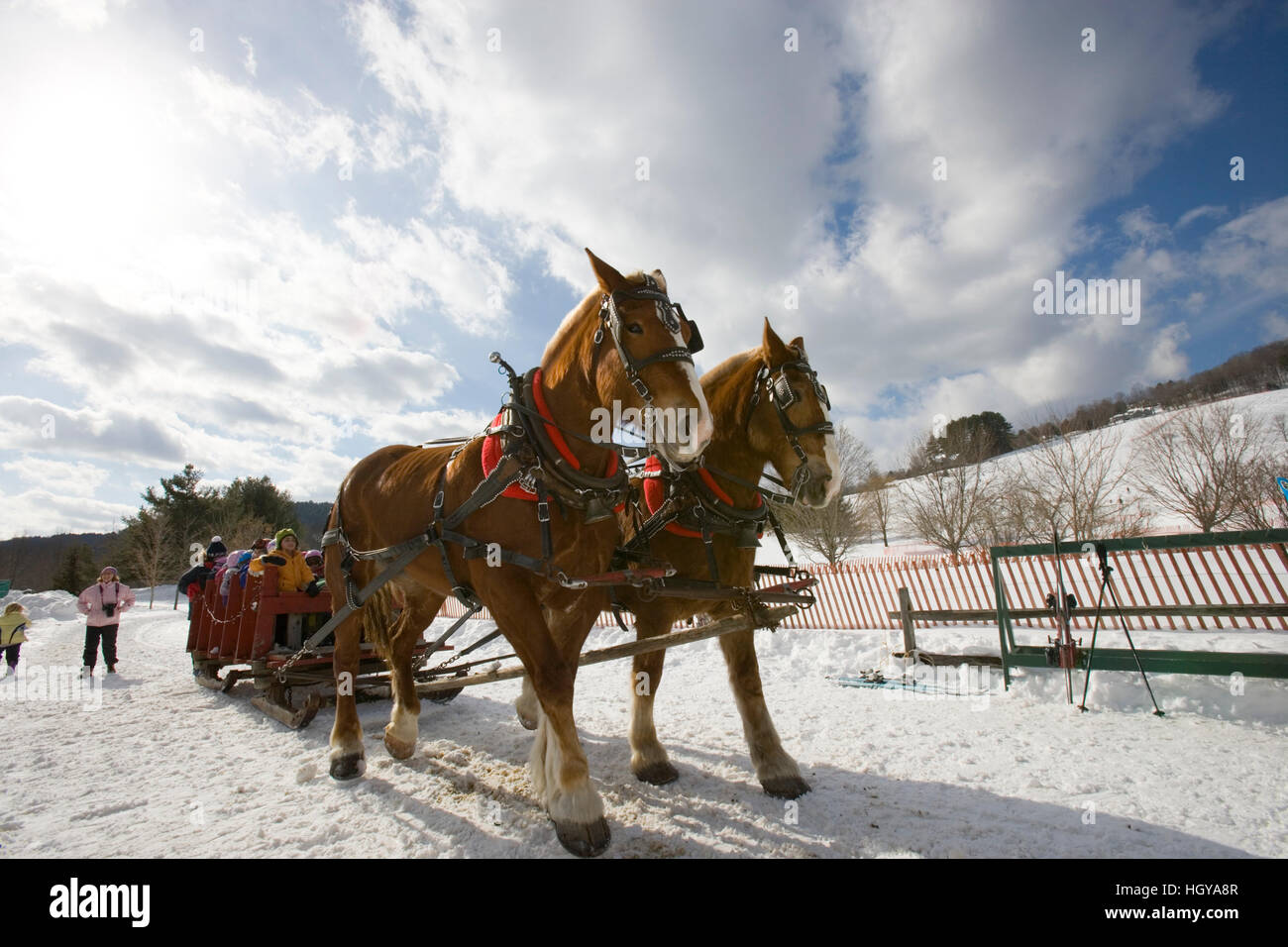 A horse drawn sleigh carries skiers in Quechee, Vermont. Stock Photo