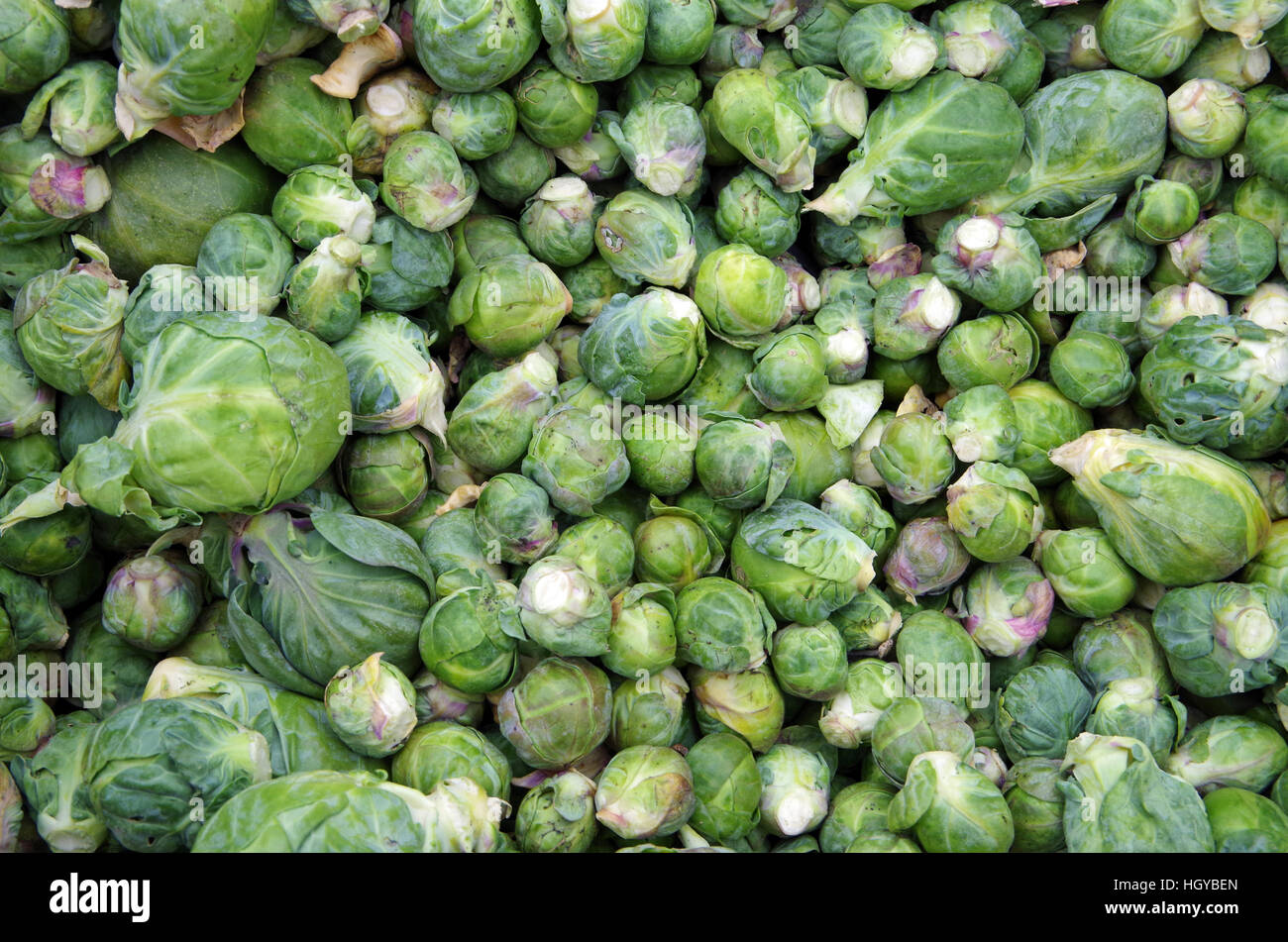 Farm fresh loose brussel sprouts viewed from above - Stock Image