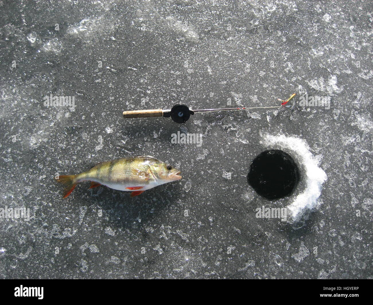 Redfin perch stock photos redfin perch stock images alamy for Ice fishing for perch