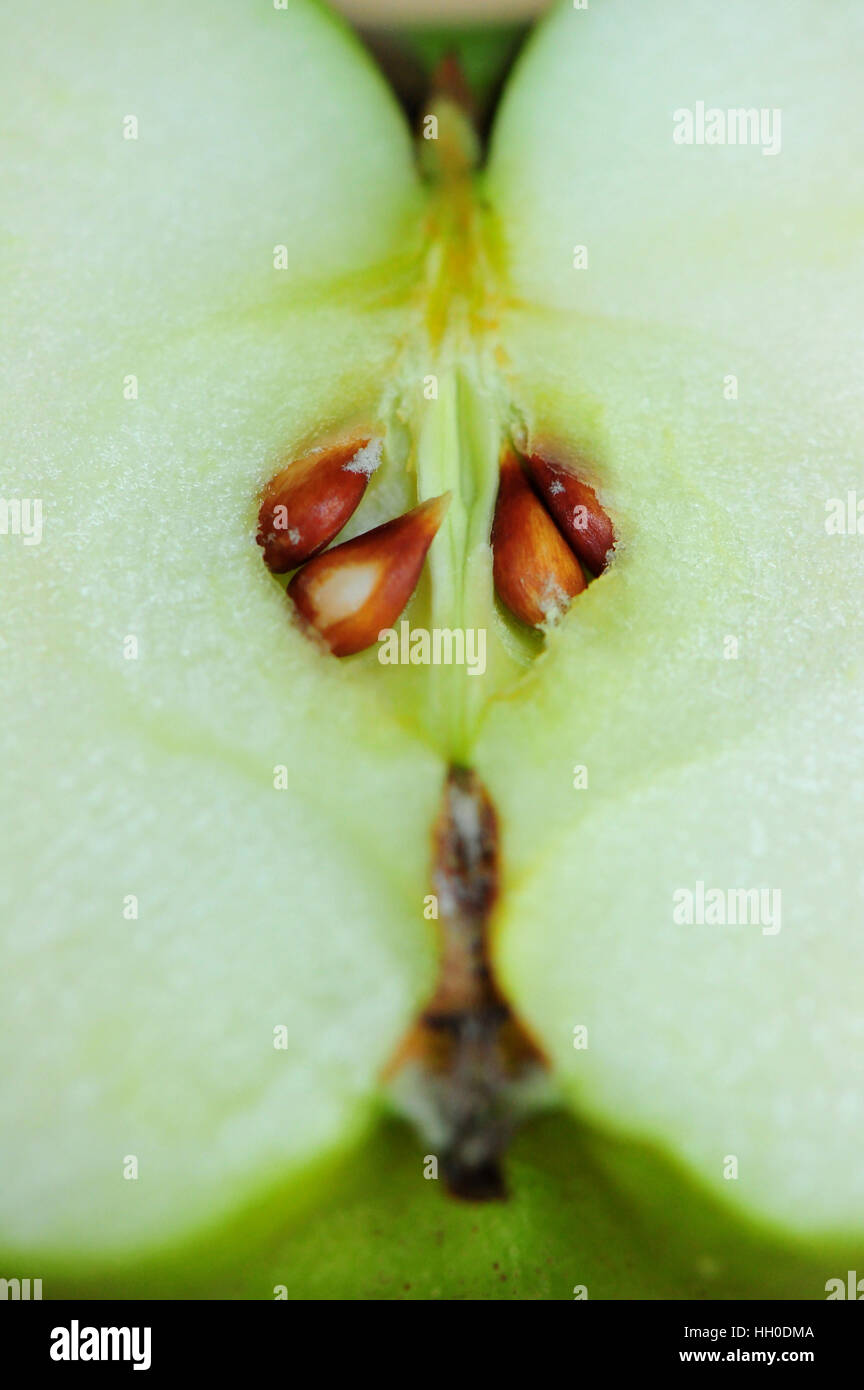Close up of green apple with seeds - Stock Image
