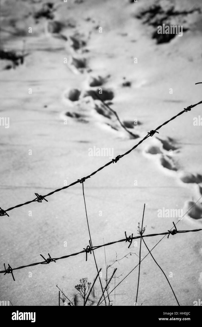 Barbed Wire Coil On Fence Stock Photos & Barbed Wire Coil On Fence ...