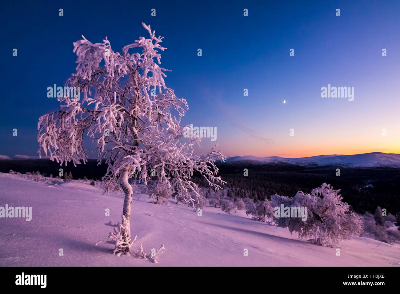 Beautiful evening in Urho Kekkonen national park - Stock Image