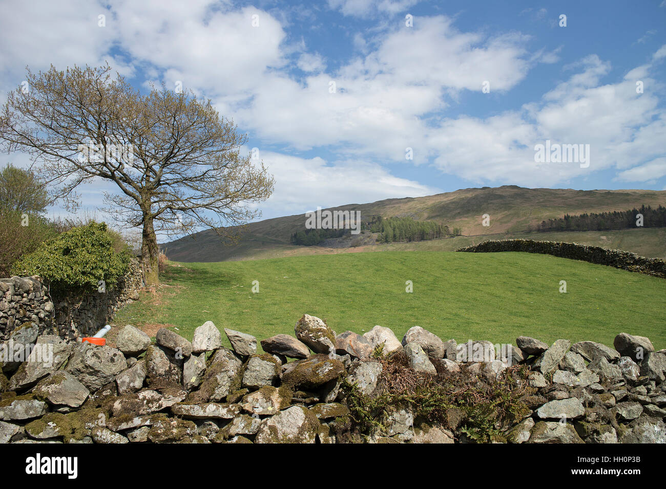 Dry stone wall, meadow and fells, Troutbeck, near Windermere, Lake District, Cumbria - Stock Image