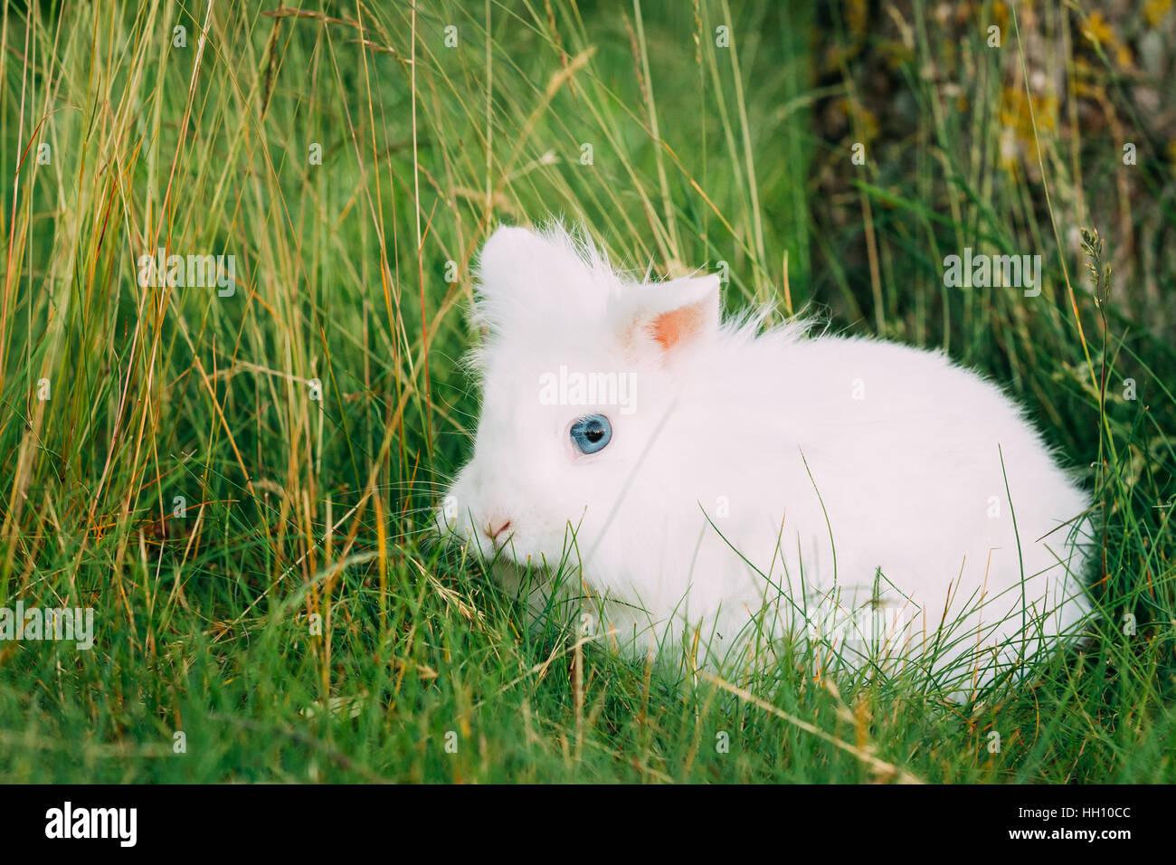 Decorative rabbits: breeds, their description and photo. Domestic dwarf rabbits: description, care, content 71