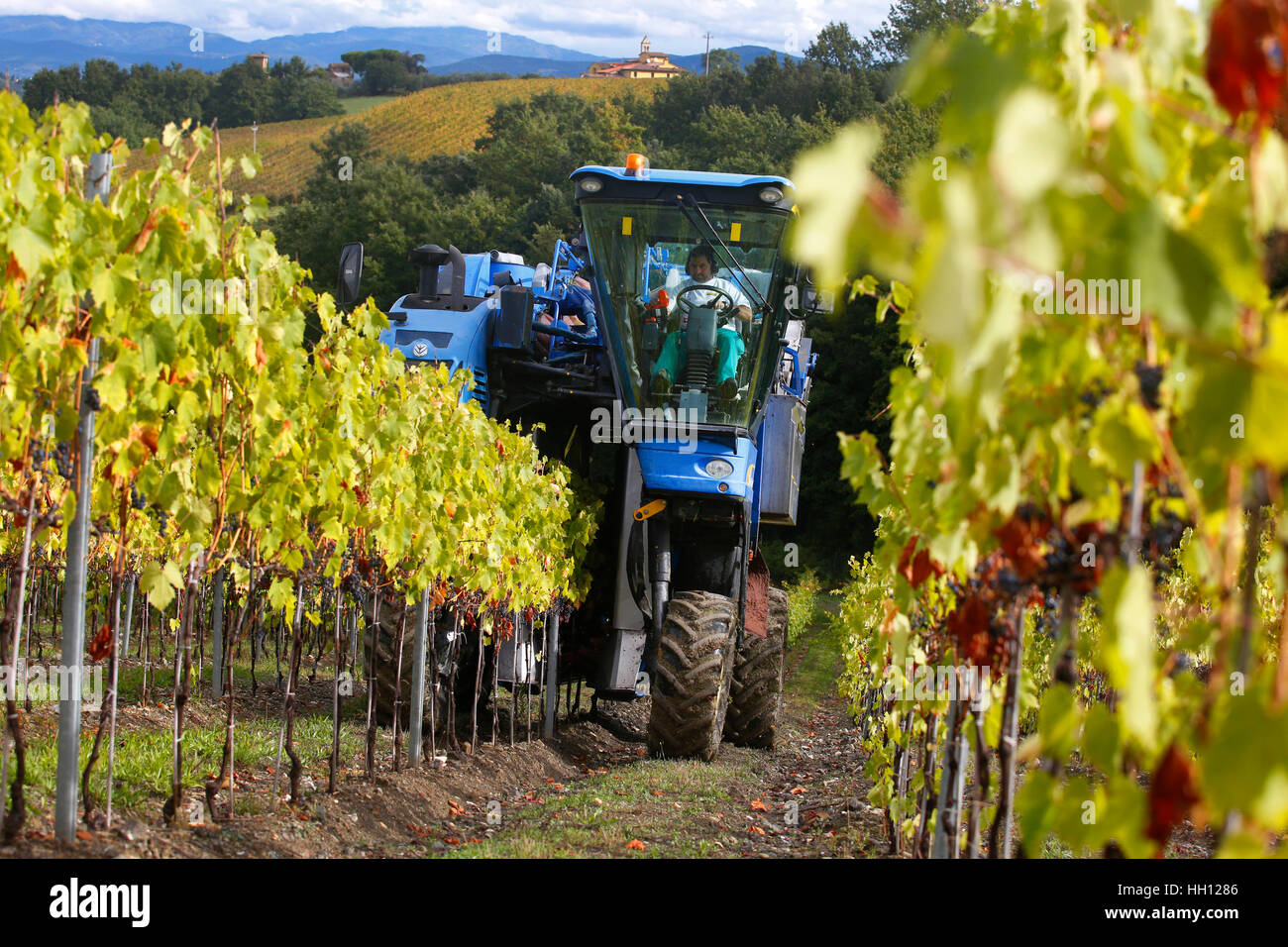 A New Holland Grape Harvester at work in the around San Casciano in Val di Pesa in Tuscany, Italy. - Stock Image