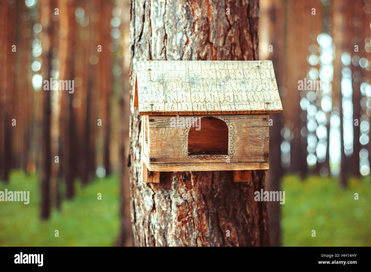 Birdhouse in the woods - Stock Image
