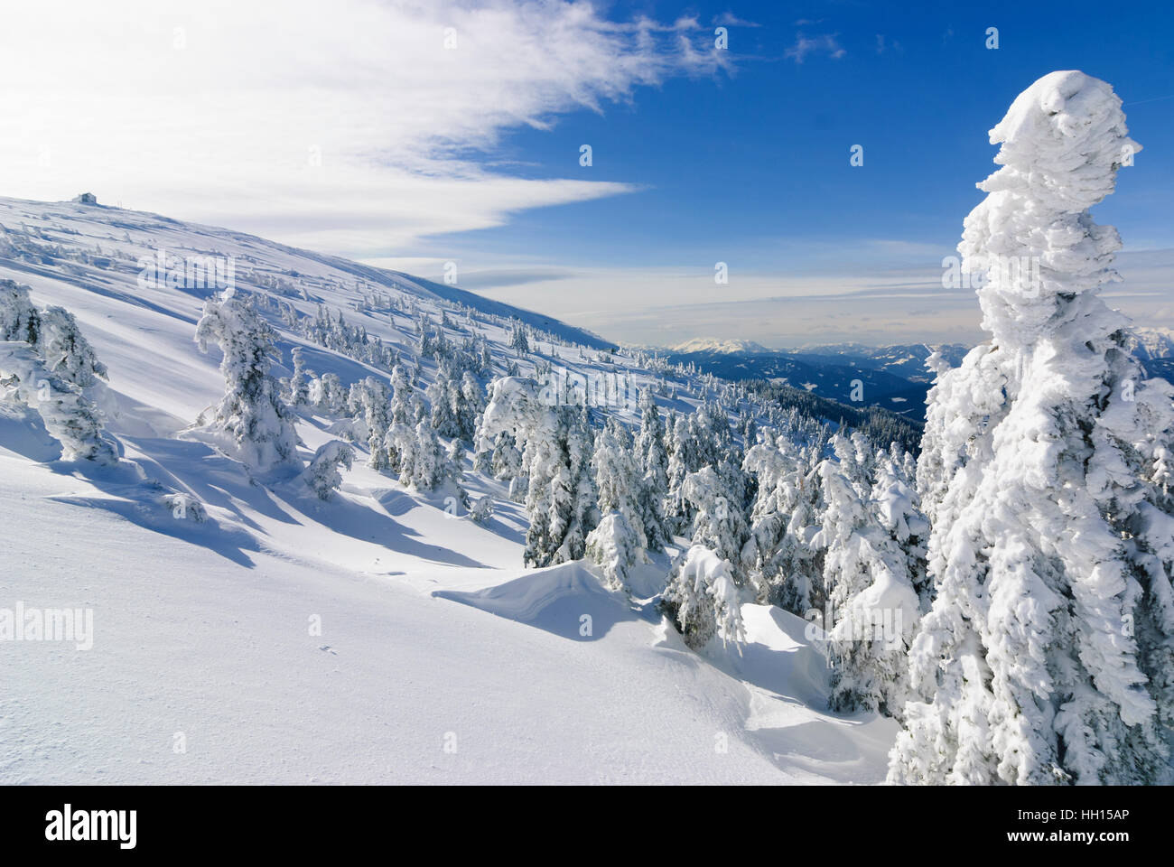 Spital am Semmering: Common spruces (Picea abies) on mountain Stuhleck with the Alois Günther hut, Obere Steiermark, Stock Photo