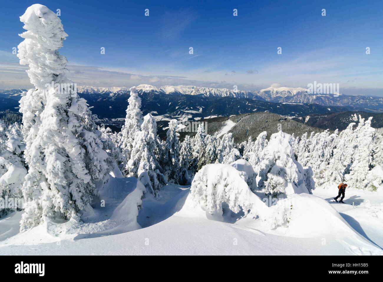 Spital am Semmering: Common spruces (Picea abies) before mountain Raxalpe (on the left) and mountain Schneeberg - Stock Image