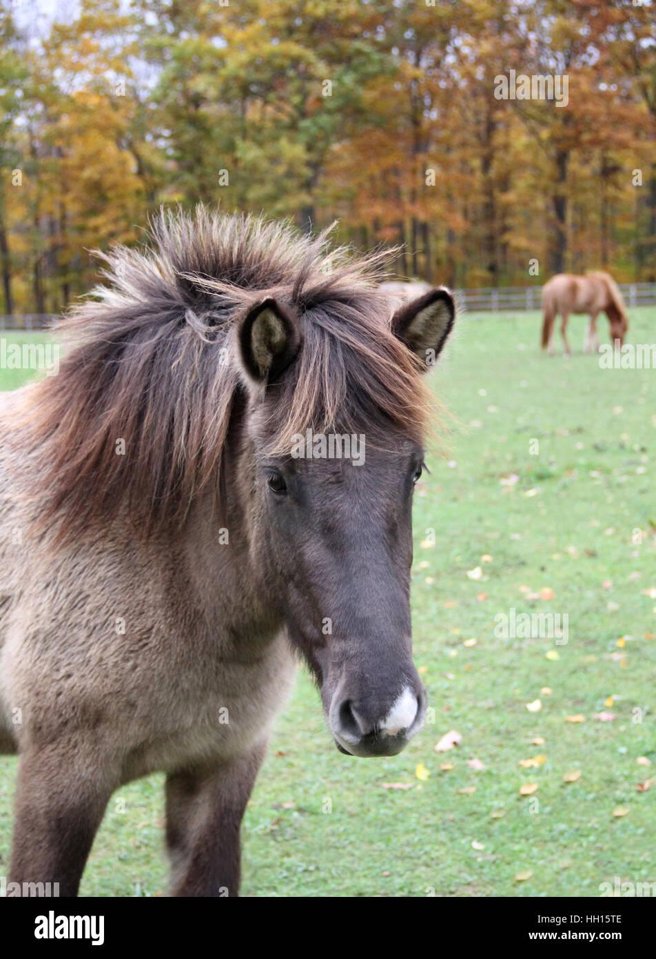 Dun Horse Color Stock Photos Dun Horse Color Stock Images Alamy
