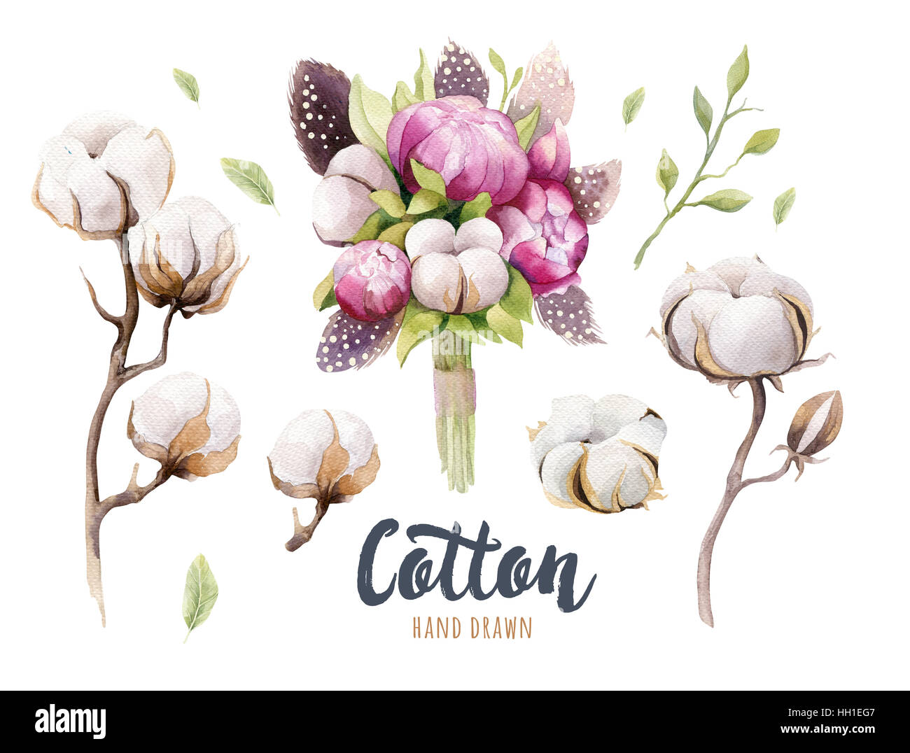 Set of hand drawn watercolour Cotton boll, peonies and feathers. Stock Photo