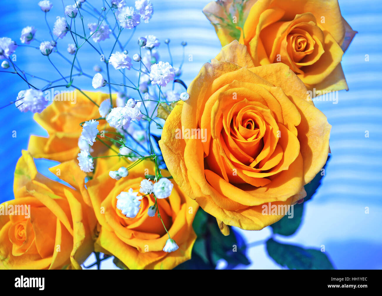 Yellow roses flower bouquet with blue background stock photo yellow roses flower bouquet with blue background izmirmasajfo