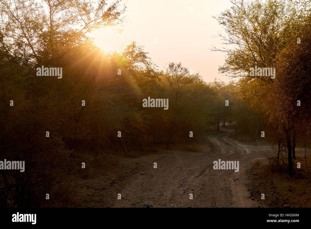 wilderness in Ranthambhore Tiger Reserve, Rajasthan India Stock Photo