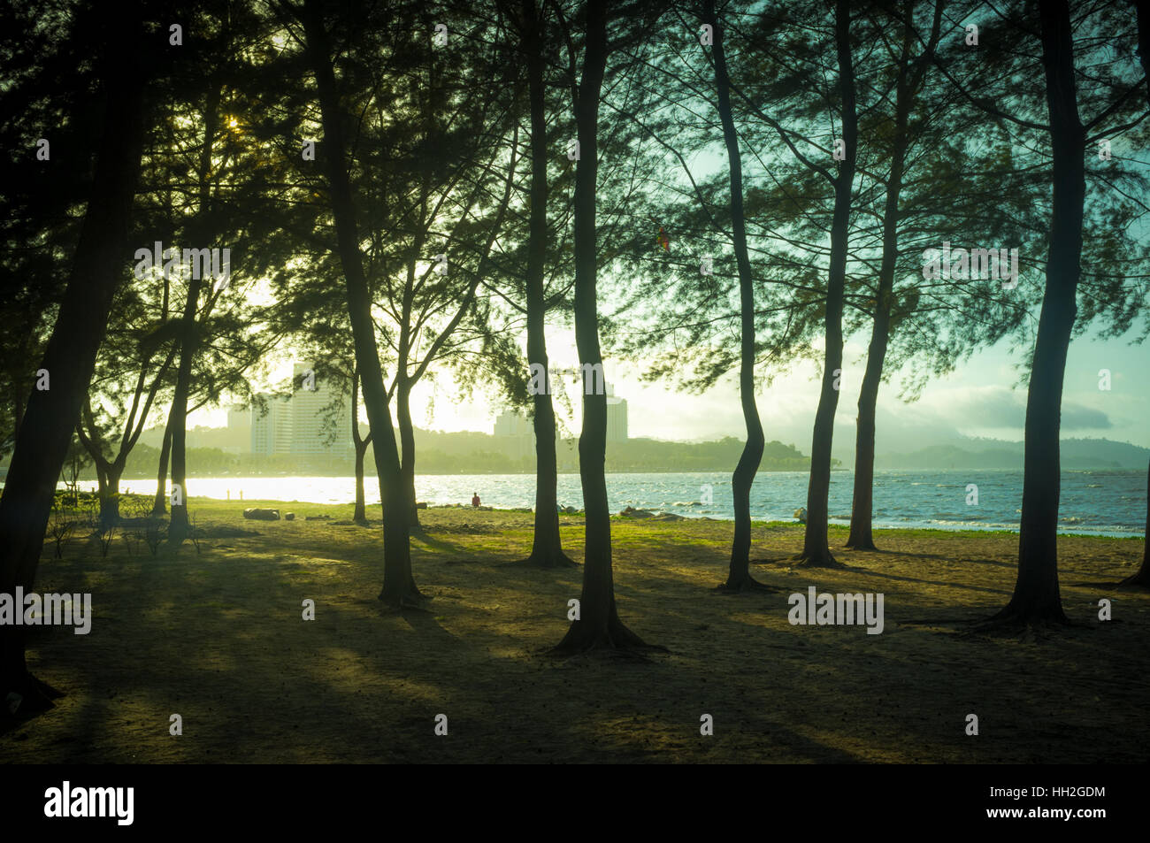Beach with trees, Kota Kinabalu, Sabah, Malaysian Borneo - Stock Image