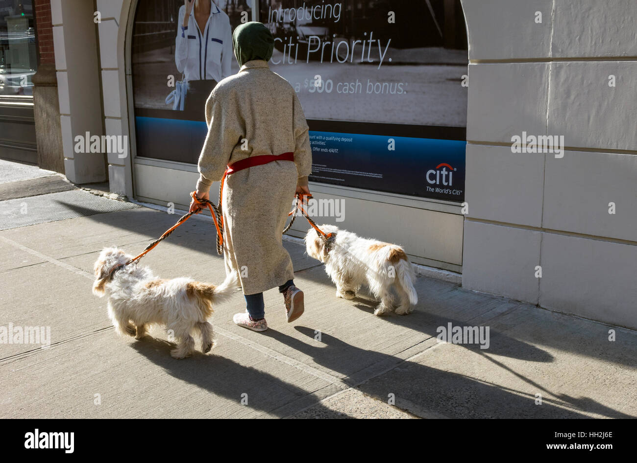 Matching Havanese dogs being walked by a woman in New York City - Stock Image