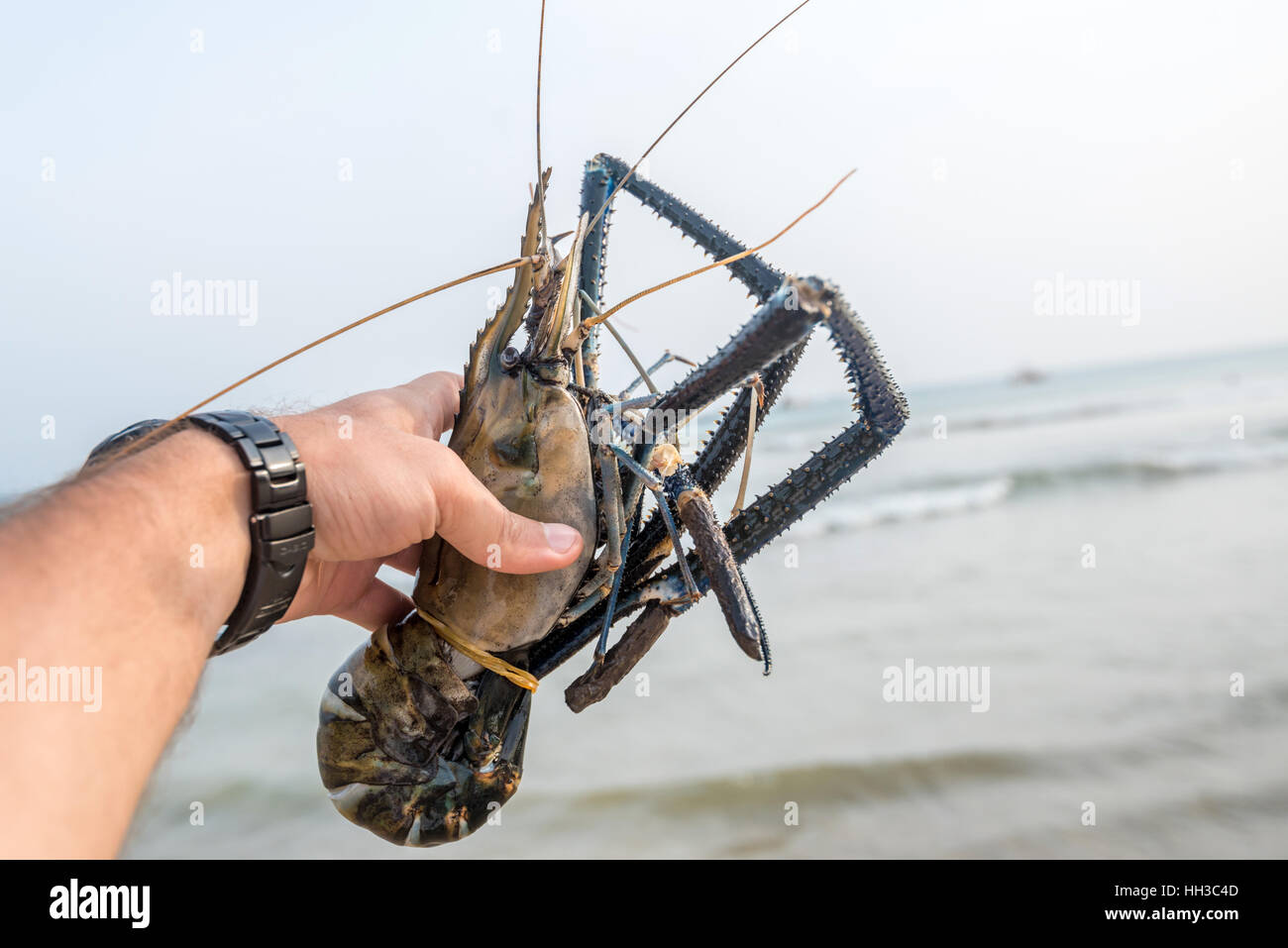 Giant freshwater prawn Stock Photo: 130997117 - Alamy