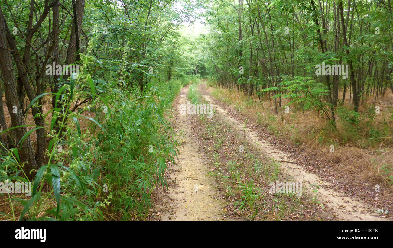 Unpaved road in the forest - Stock Image