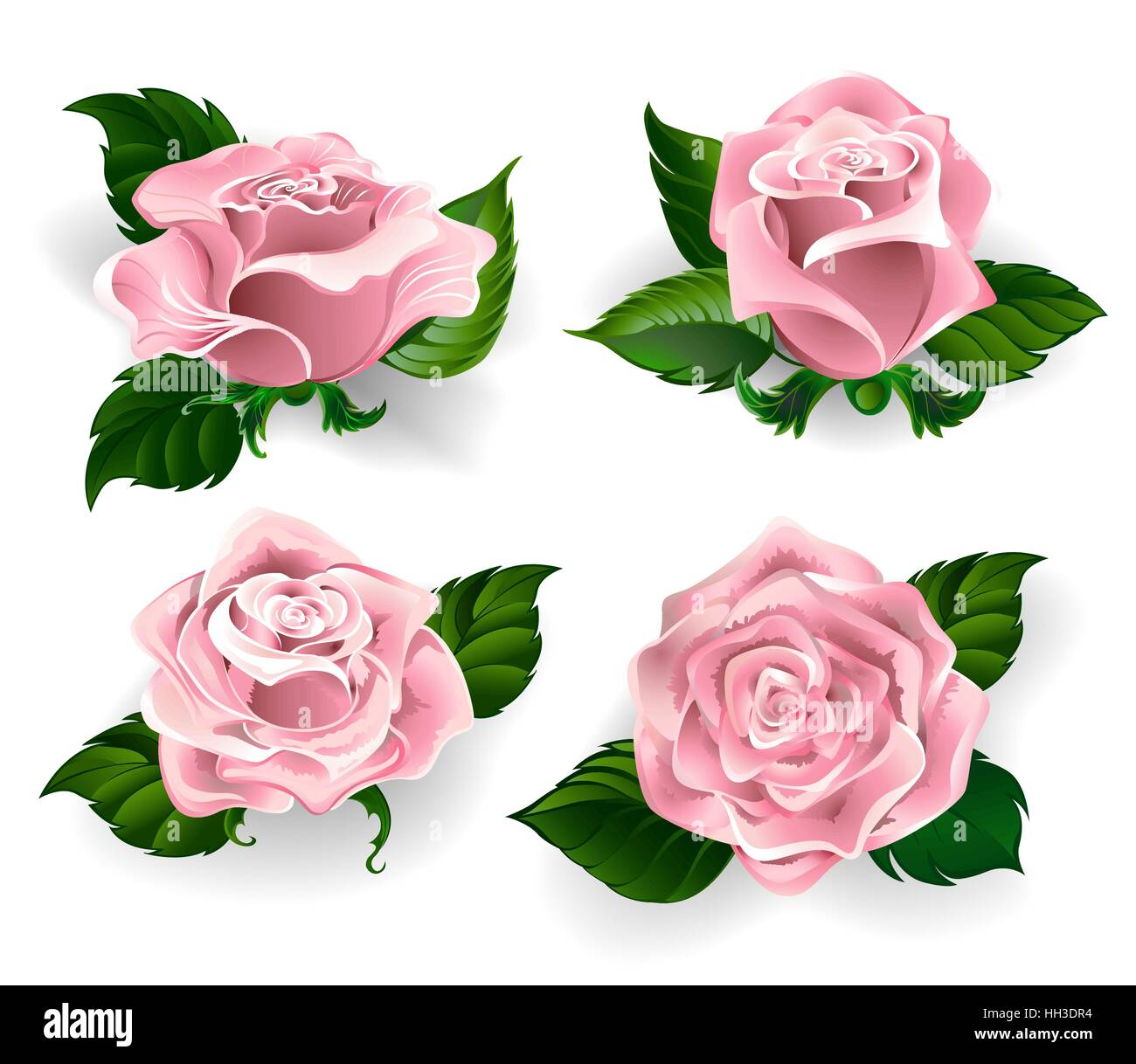 Set of painted roses rose quartz color, with green leaves on a white background - Stock Vector