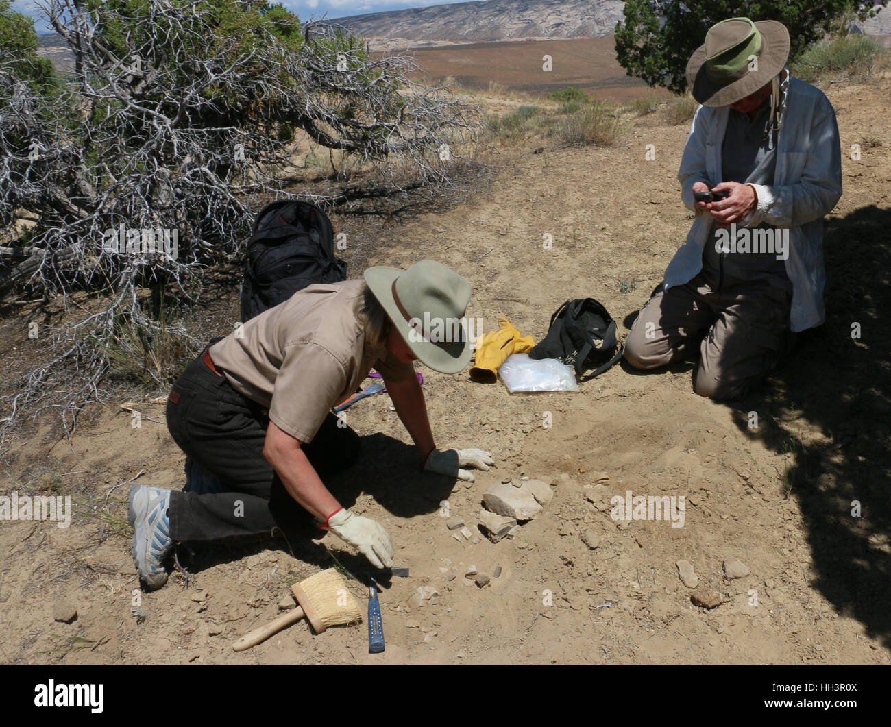 Paleontologists extract collect fossils Utah Great Basin desert - Stock Image