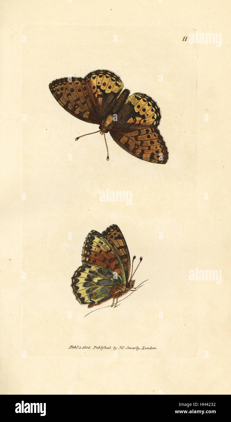 Dark green fritillary, Argynnis aglaia (Charlotte butterfly, Papilio charlotta). Handcoloured copperplate engraving Stock Photo